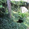 Angolo selvatico con edera