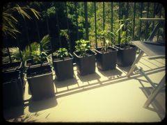 Coltivazione Pepper 2013 02