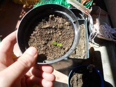 le mie piante 2013