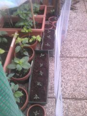panoramica piante serra