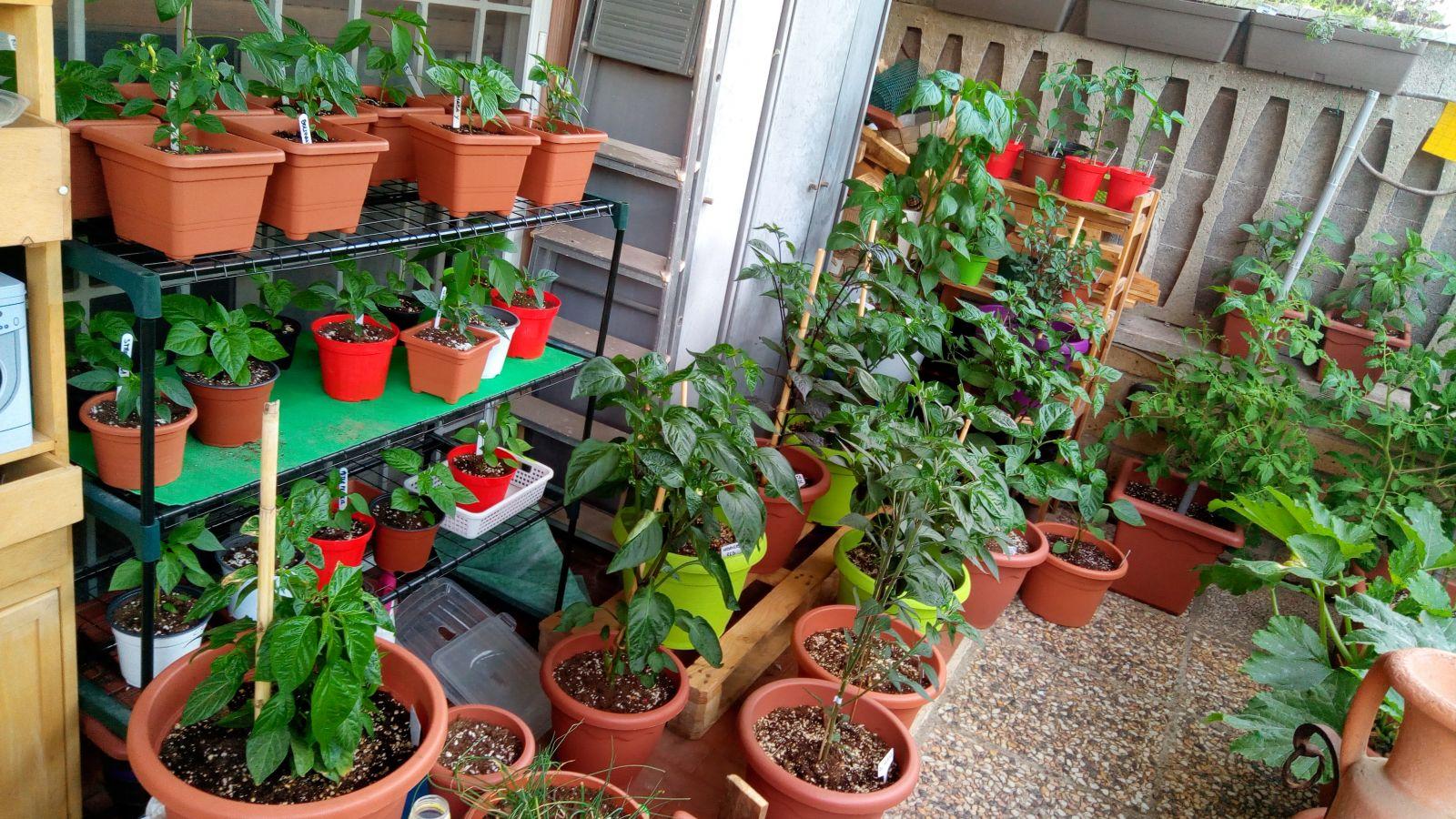 coltivazione 2017 06 06 19.40.20