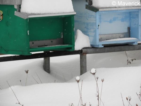 Attached Image: api e neve febbraio 2012 (4).jpg