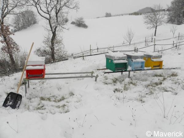 Attached Image: api e neve febbraio 2012 (8).jpg