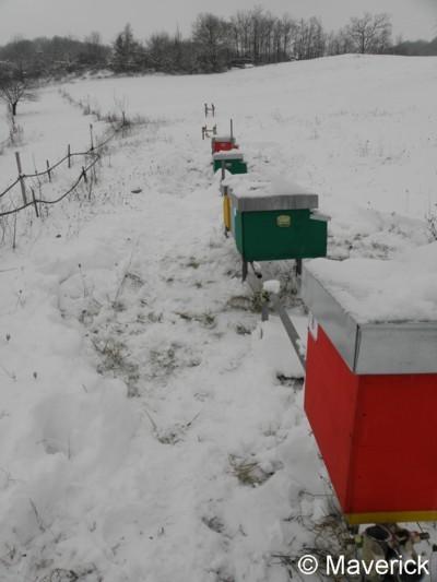 Attached Image: api e neve febbraio 2012.jpg