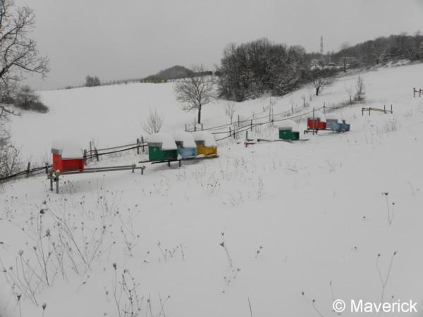 Attached Image: api e neve febbraio 2012 (1).jpg