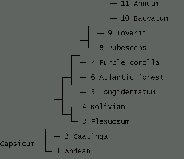 filogenesi.jpg