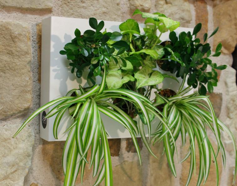Piante da appendere mt51 regardsdefemmes - Porta piante da interno ...