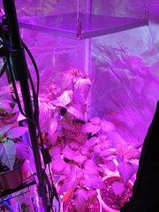 grobox spazio piante alte