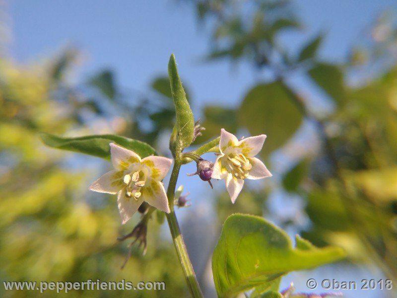 eximium_white_flower_002_fiore_26.jpg