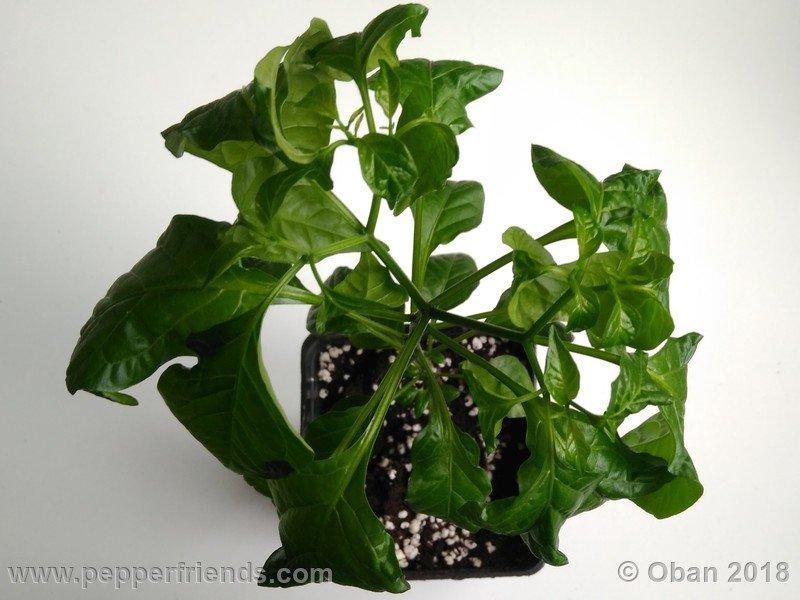 nome-cultivar_001_pianta_05.jpg