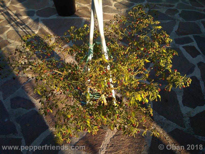 nome-cultivar_001_pianta_20.jpg