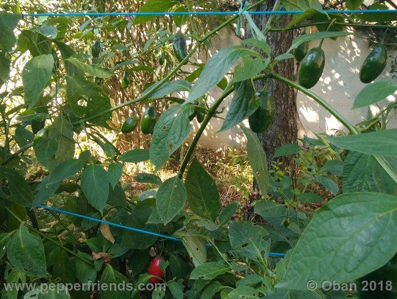 rocoto-montufar_002_pianta_13.jpg