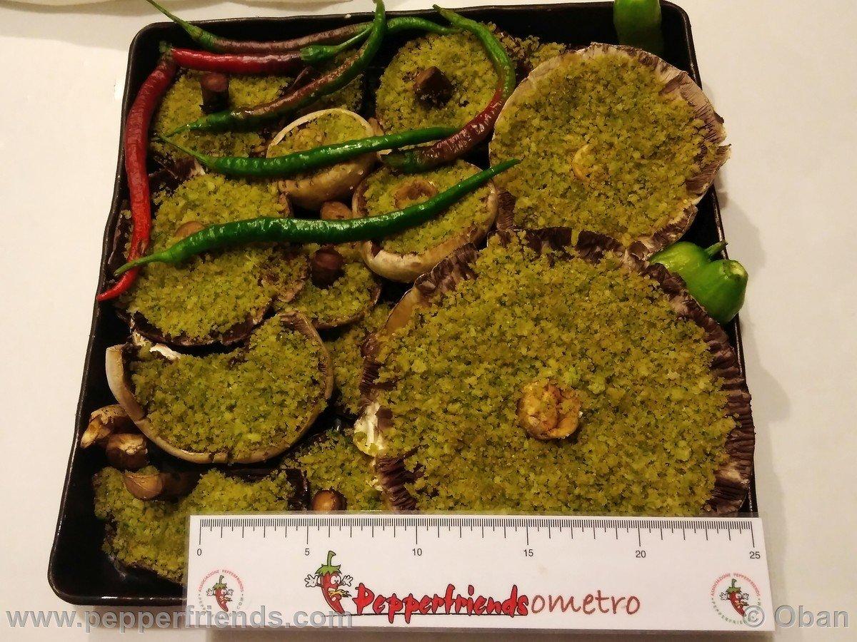 Funghi Prataioli - 34.jpg