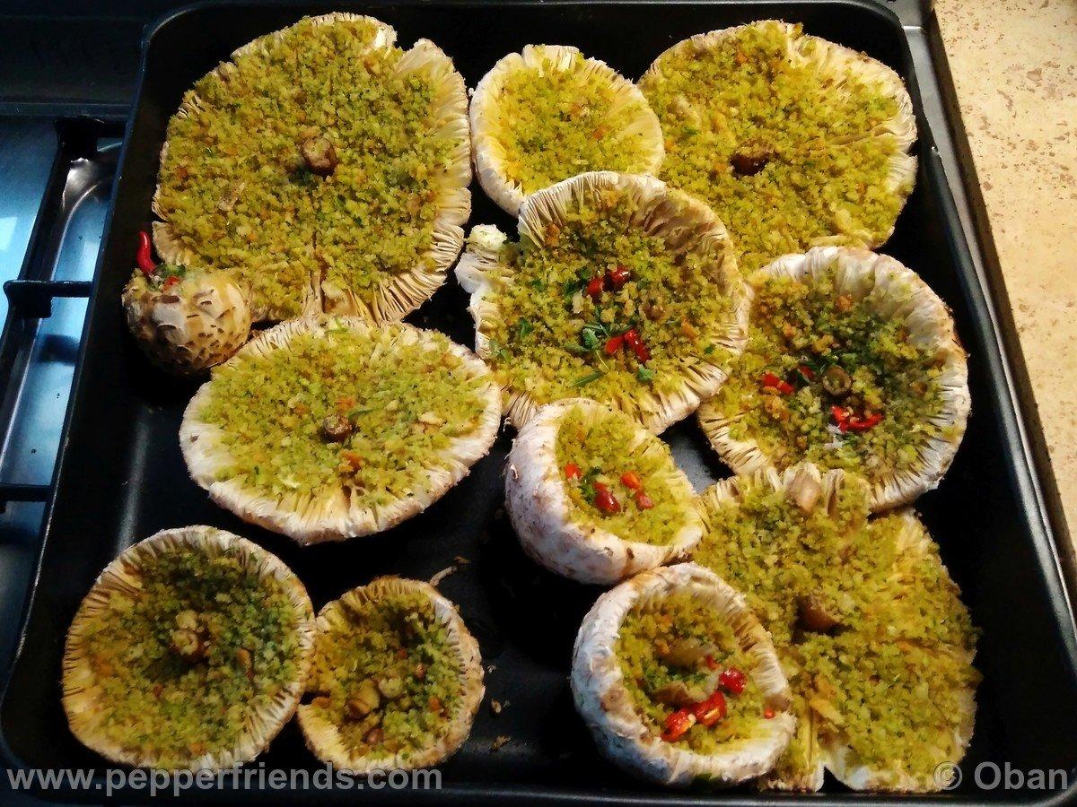 Funghi Mazze Di Tamburo - 28.jpg