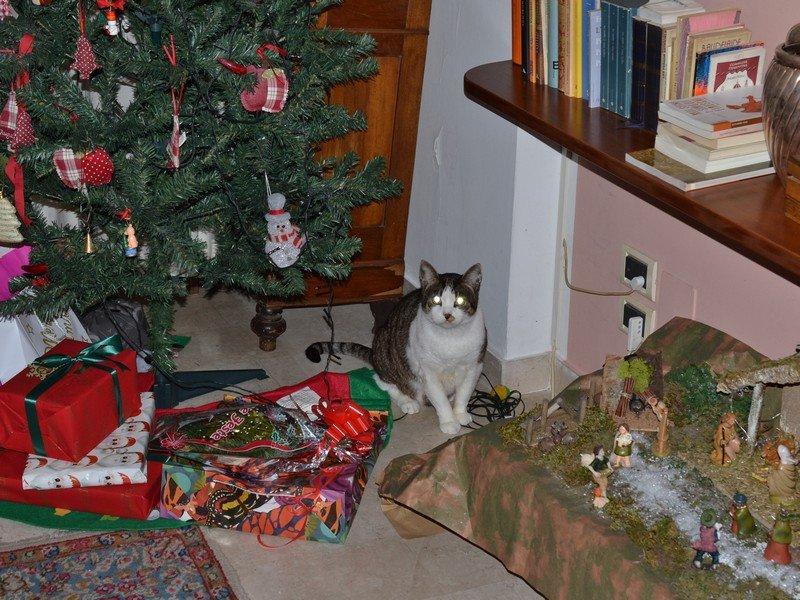 Robinson Natale.jpg