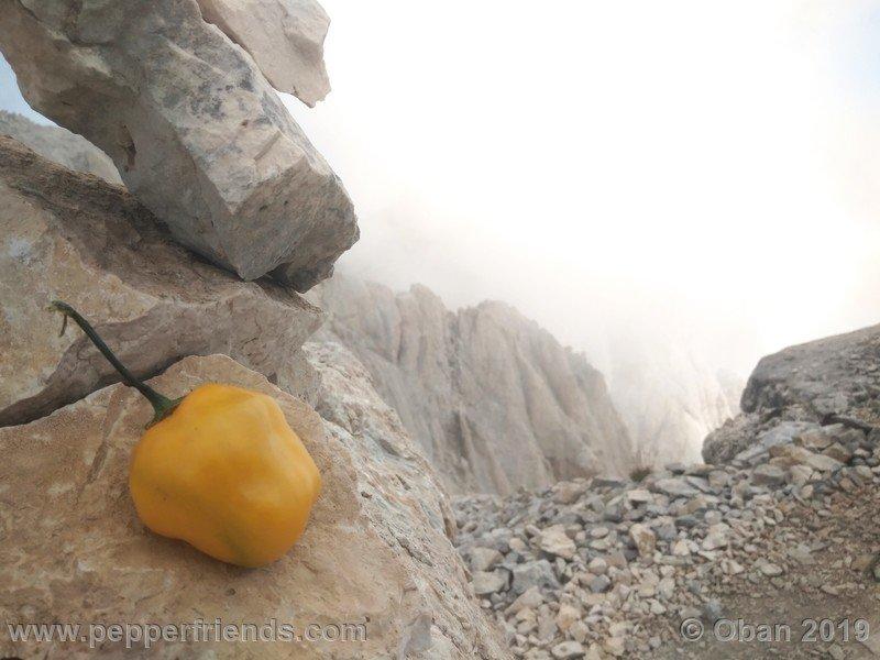 rocoto-stolen-yellow_003_frutto_06.jpg