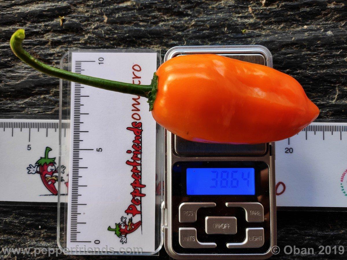 jamy-x-aji-amarillo-f1-ob02_001_frutto_09.jpg