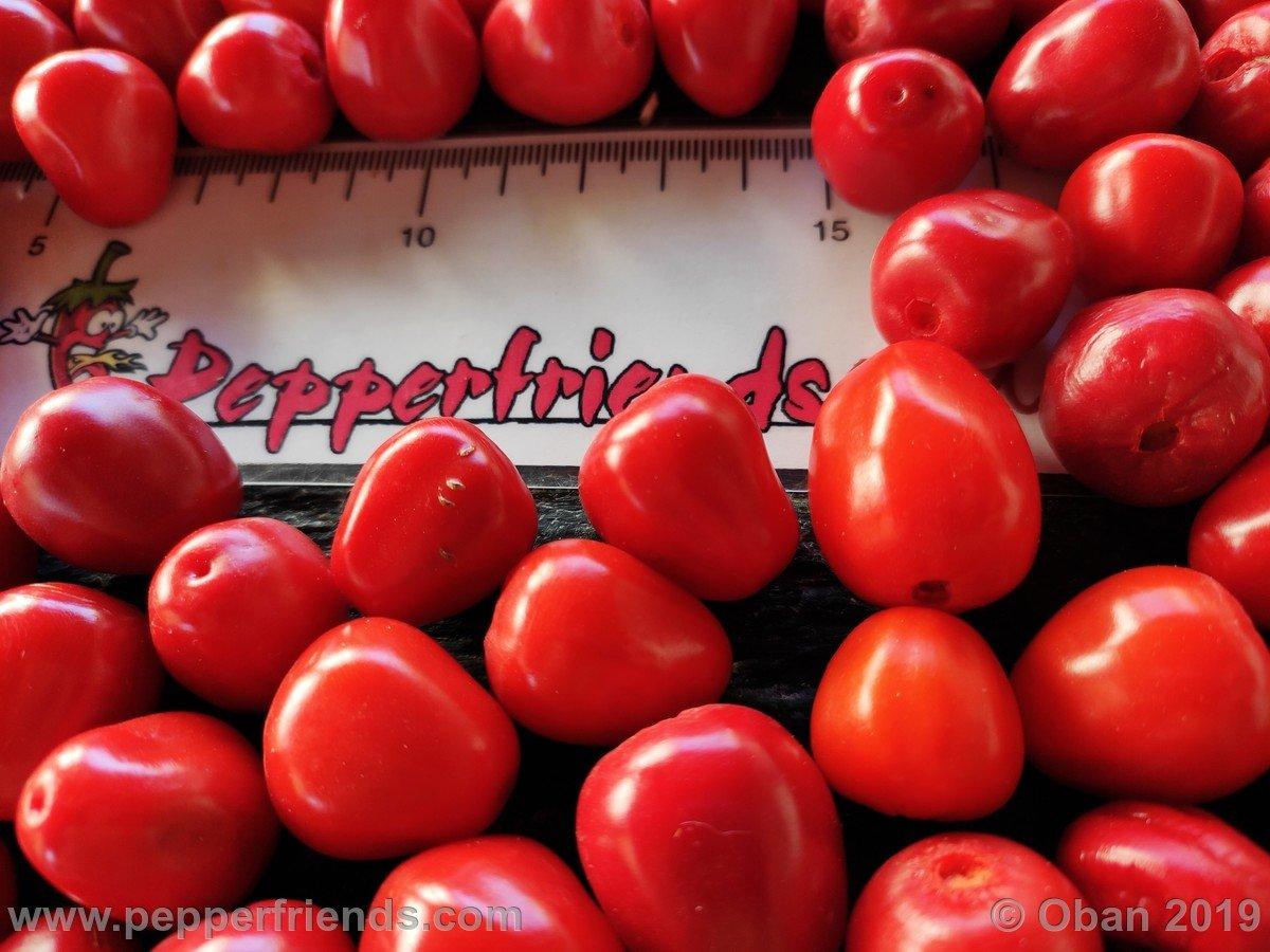rocopica-ob29-x-rocoto-big-brown-f1-ob01_001_frutto_12.jpg
