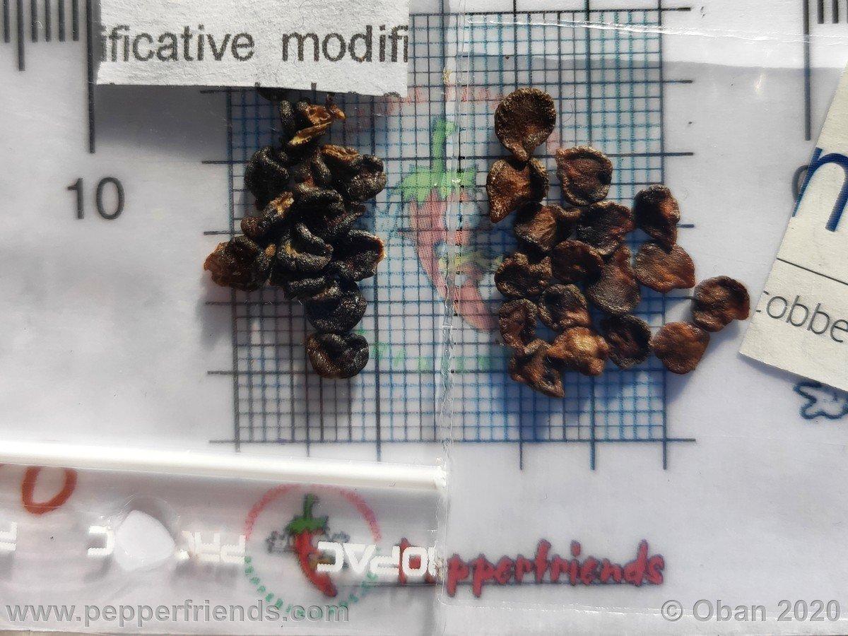 rocoto-stolen-yellow-x-cap-500-f1-ob01_001_frutto_42.jpg