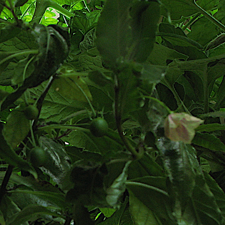 fioriefrutti1.jpg.9620d52333f8abcad8d9dc419b399330.jpg