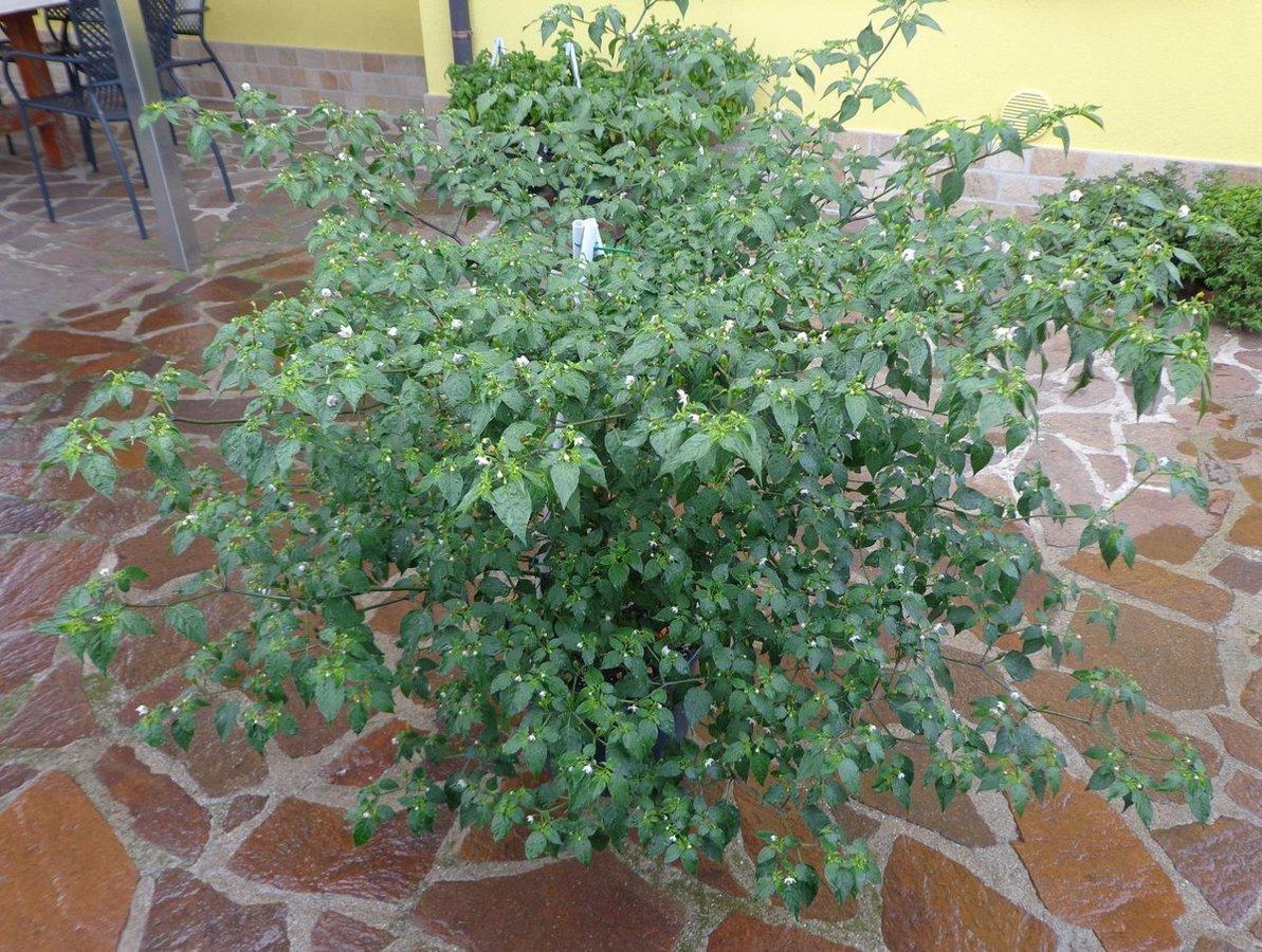 DSC01676JudyBlueMisteryxCAP214.jpg