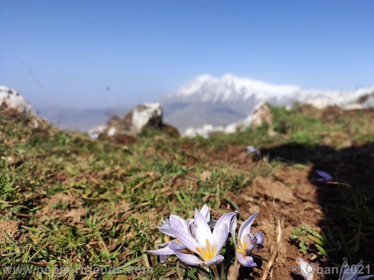 Tre Monti - 02.jpg