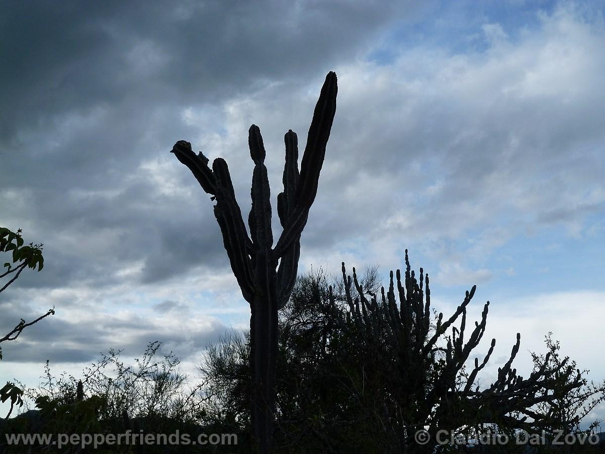 cactusmataral.jpg