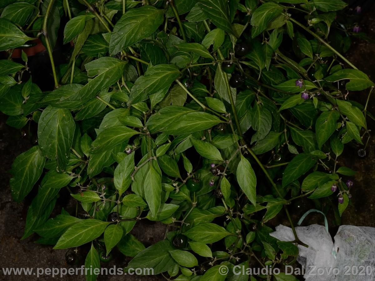 p5096p2frutti.jpg