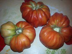 trio pomodori