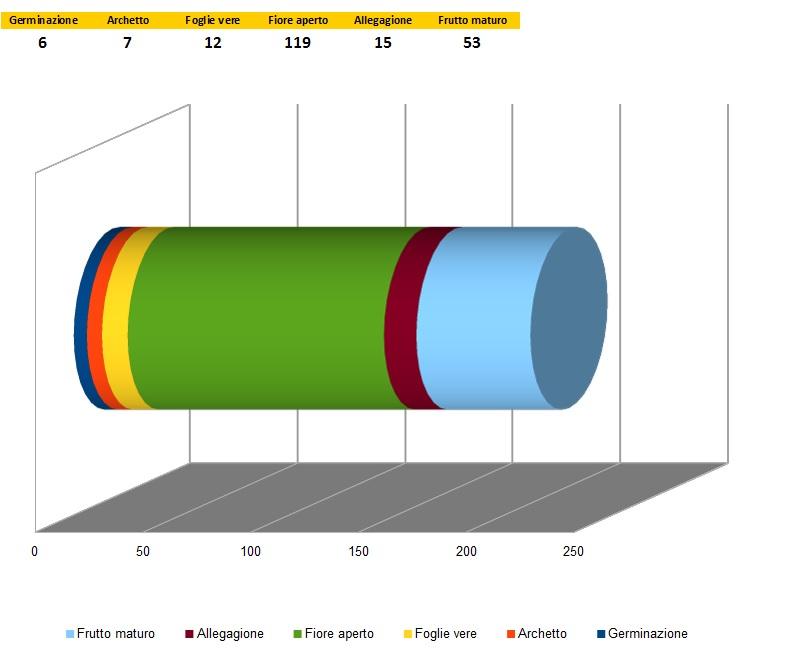 00 Grafico tempistiche coltivazione Rapace 2014 - Ata Ijosi.jpg