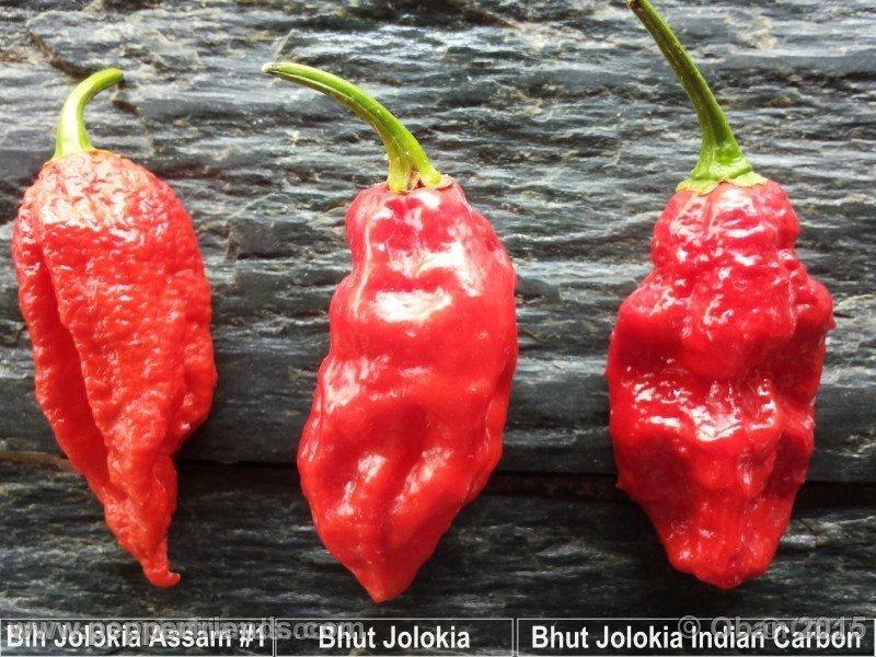 bhut-jolokia_002_frutto_10.jpg