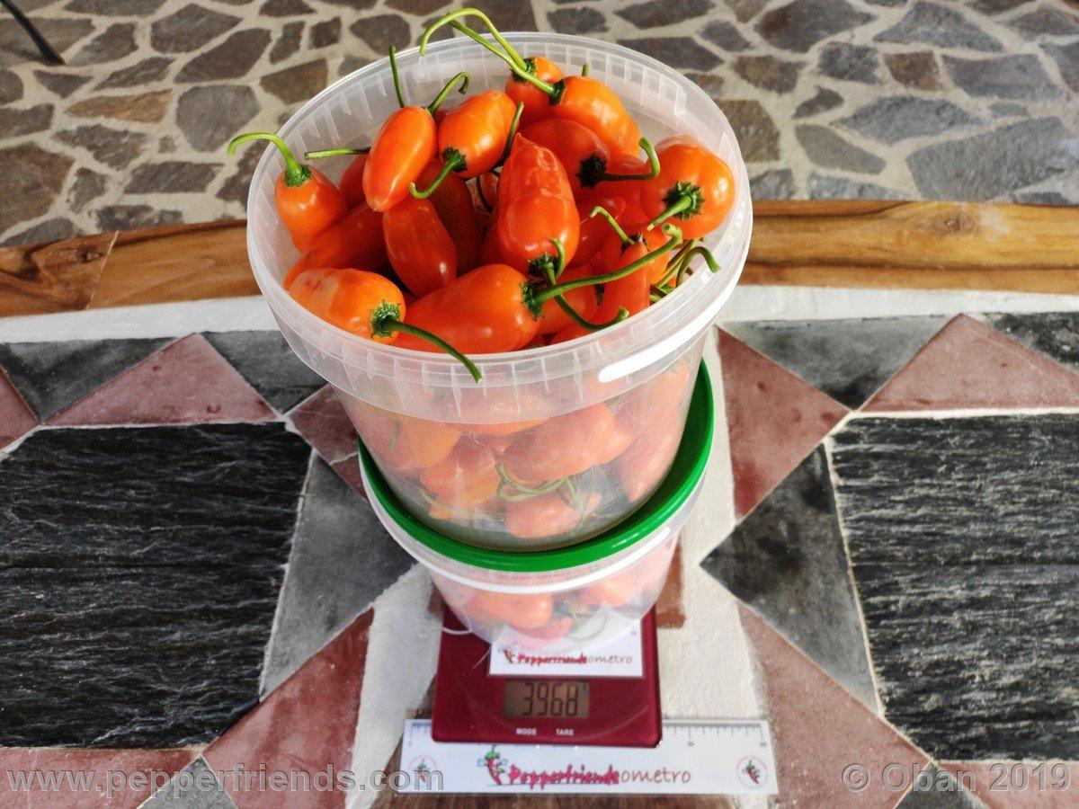 Marmellata Di Jamarillo - 01.jpg