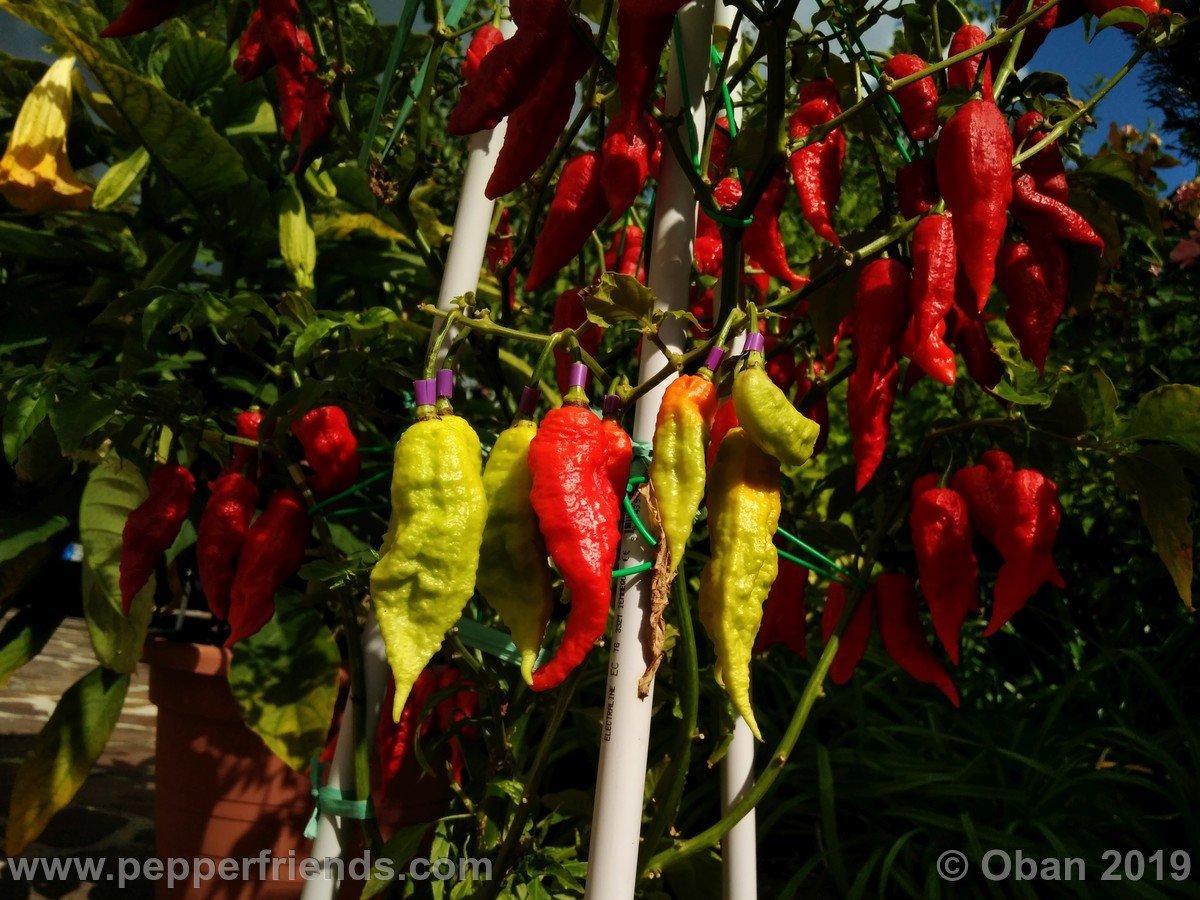 not-leviathan-scorpion-gnarly-(red)_001_pianta_19.jpg