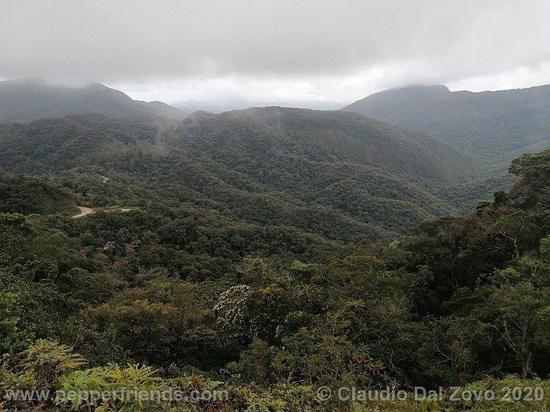 foresta1.jpg